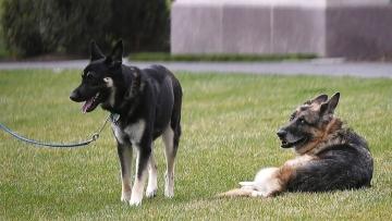 Bidens' older dog, Champ, has died; German shepherd was 13