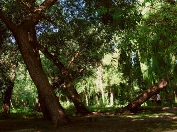 左宗棠收复新疆时战事繁忙,为何还栽种了200万棵柳树