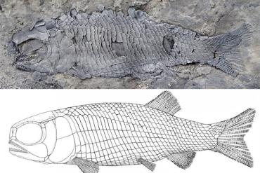 云南发现2亿多年前的稀有鱼类
