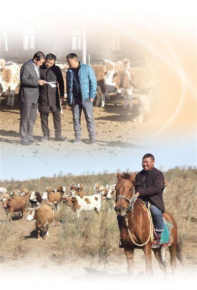 在内蒙古兴安盟科右中旗,农牧民可以用牛作为抵押物向银行申请贷款 新型抵押贷 带来好日子