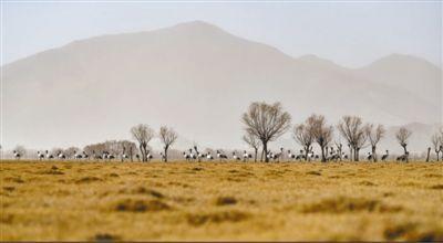 西藏生态保护红线面积占全区国土面积45% 今年将完成造林110万亩
