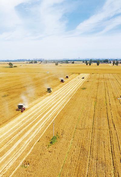 全国已收获小麦面积2.18亿亩