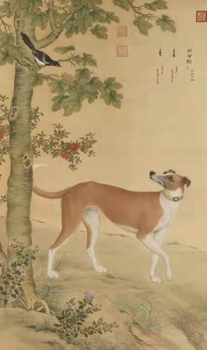 狗不如猫?狗狗那么可爱,怎么会有人不喜欢狗狗!