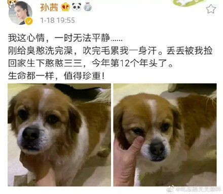 郑爽被多名艺人抵制 郑钧斥:冷酷残忍内心如地狱