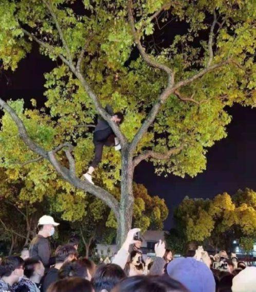 杨幂穿露腿黑裙拍戏路透曝光 人山人海有人爬树看