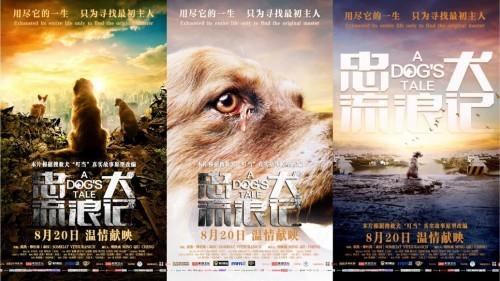 《忠犬流浪记》今日上映 四大看点打造今夏重磅催泪弹