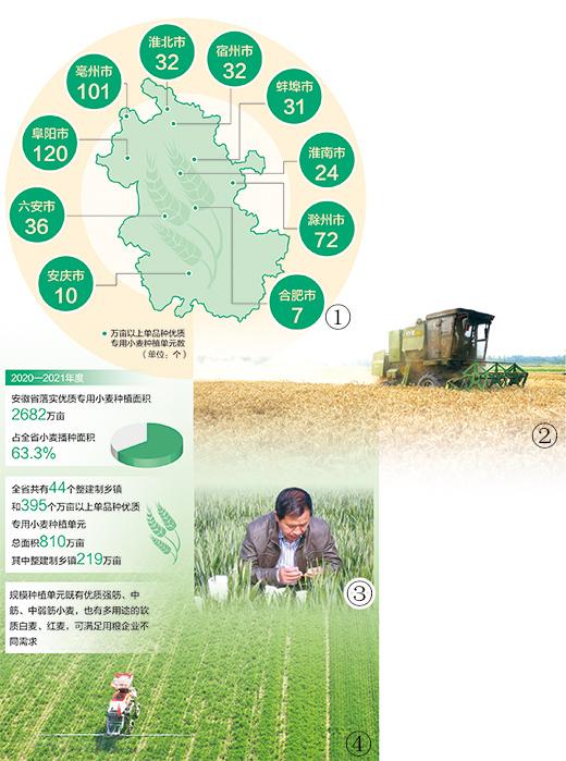 安徽探索推进小麦种植供给侧结构性改革——一张分布图 蹚出转型路(经济聚焦·打好种业翻身仗④)