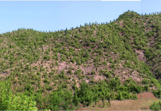 北京治理风沙源:将封山育林25万亩