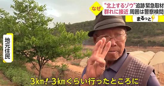 """""""进击的巨象!""""云南北迁野象群红到了日本"""