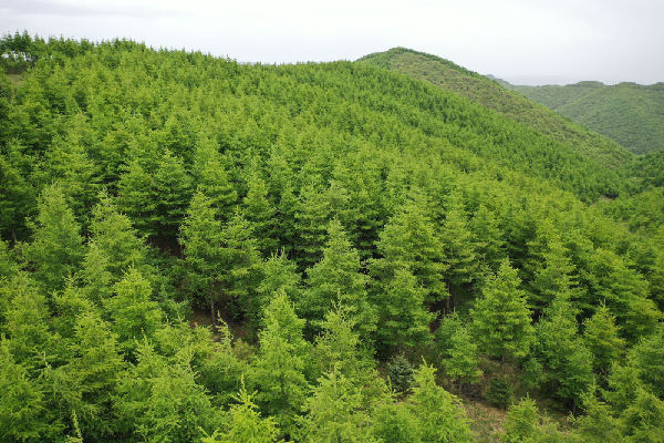 西海固变绿,这绿色是希望之源!
