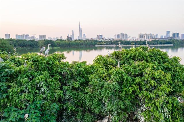 广州海珠湿地斩获2021IFLA两项国际大奖 以传承岭南传统文化遗产为目标