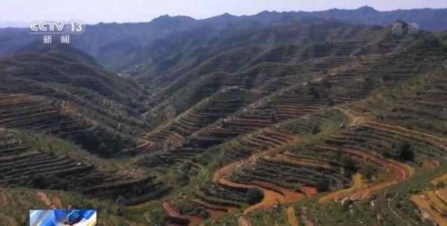 沿着高速看中国丨花椒、黑枣、小米畅销……太行山高速扩宽致富路