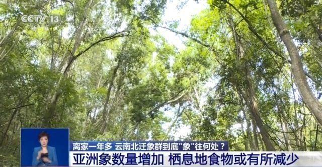 """记者探访:北迁象群为何离家出走""""乐不思蜀""""?"""