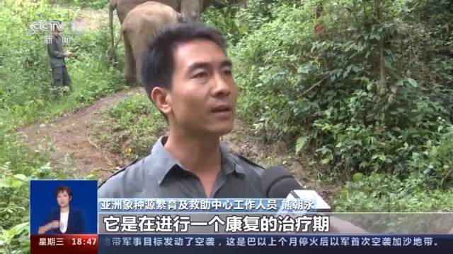 先后救助大象20余次!云南保护大象由来已久