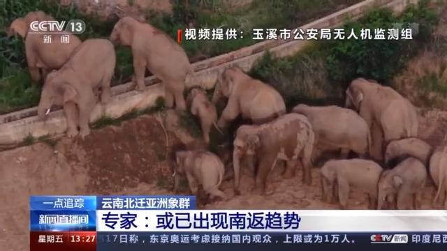 一路逛吃玩耍的大象们啥时候回家?或出现南返趋势