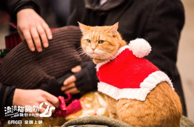 《流浪猫鲍勃2》定档8月6日 延续最后的温暖