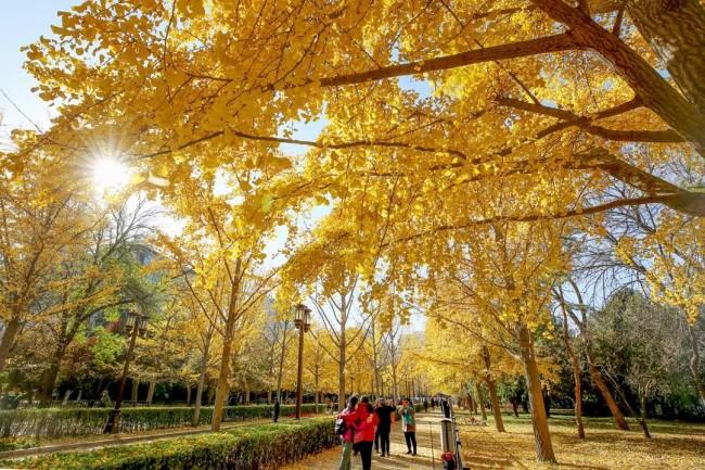 霜叶红于二月花!京城20处赏红片区等您来