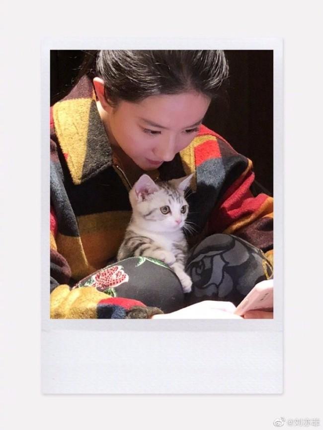 刘亦菲凌晨晒收工美照 抱宠物大眼呆萌