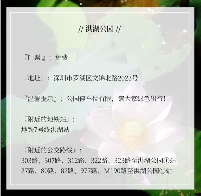 2021深圳洪湖公园荷花最晚开放到什么时候?