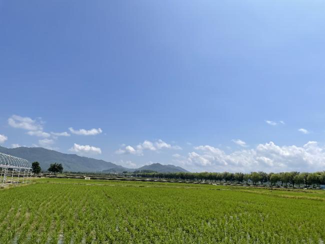 广州增城区高质量推进乡村全面振兴 投入超10亿元打造现代农业产业园