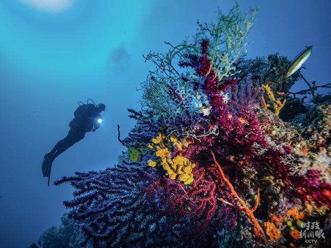 """△5月22日是""""国际生物多样性日"""",位于土耳其艾瓦勒克群岛的海底珊瑚种类繁多,色彩斑斓。"""