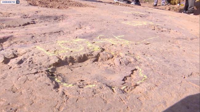 240余枚!福建首次发现大规模晚白垩世恐龙足迹群