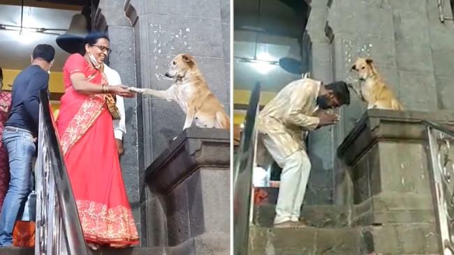 """印度一只流浪狗在寺庙外与信徒挨个握手送上""""祝福"""""""