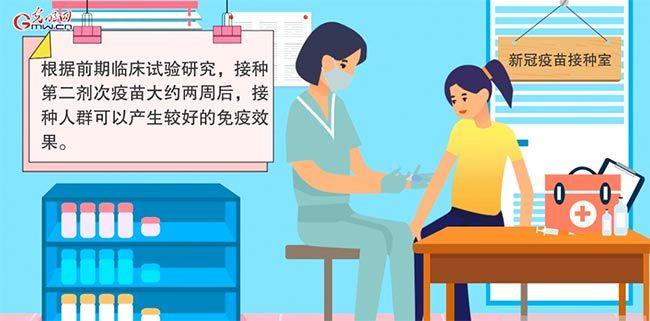 【画说防疫】新冠疫苗如何发挥作用?能保护多久?