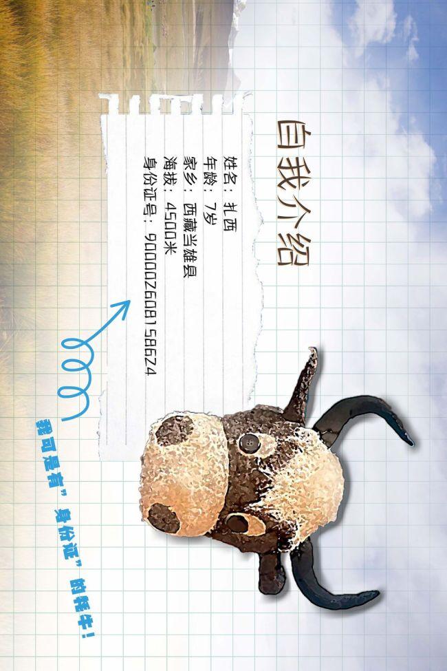 """牛年说牛:会写""""日记""""的牦牛"""