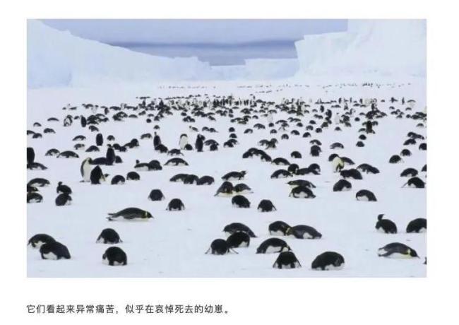 """警惕!南极又现""""西瓜雪"""",但这一点也不浪漫……"""