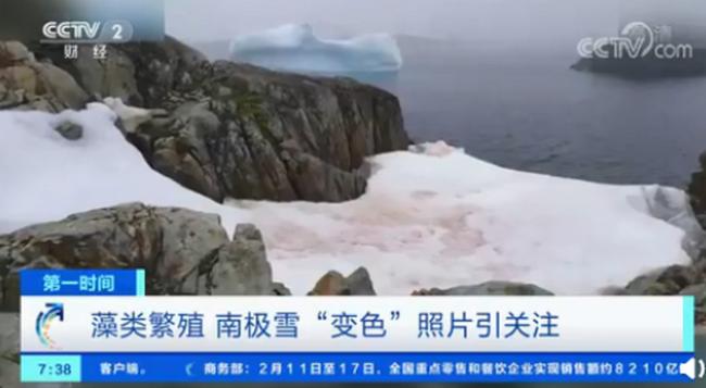 """警惕!南极又出现""""西瓜雪"""",温度升高为藻类生长提供条件"""