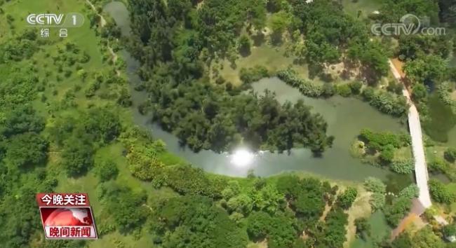 """展望""""十四五"""" 建设美丽中国 我国森林覆盖率和湿地保护率还将提高"""