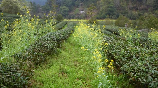 习近平福建行丨生态有术 发展有路——首站走进武夷山