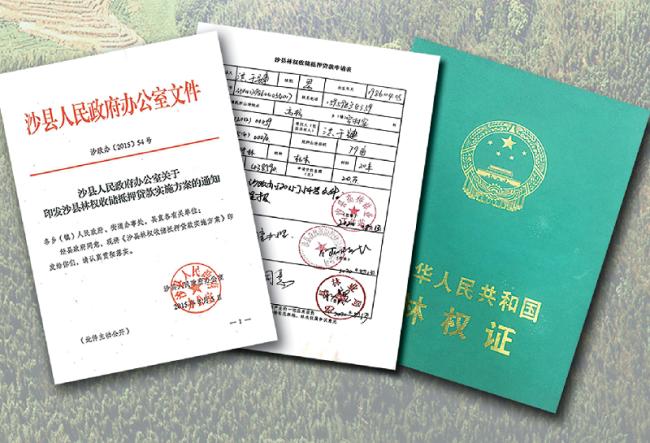 """习近平福建行丨走进沙县农村产权交易中心看""""林改"""""""