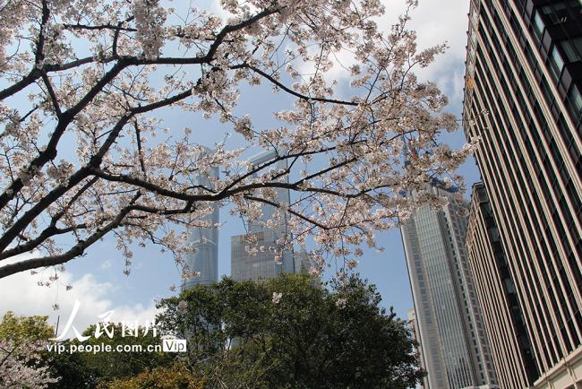 """上海:""""最美地铁口""""樱花盛开 游客争相打卡赏花【2】"""