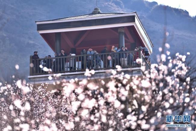 3月27日,游客在林芝市嘎拉村观赏盛开的桃花。