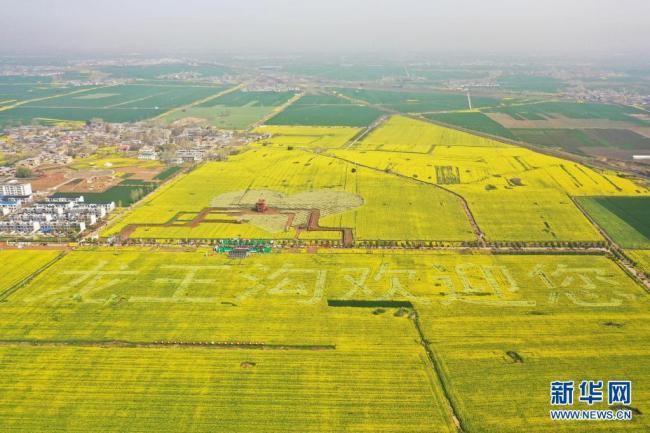 河南宝丰:打造赏花经济 助力乡村振兴