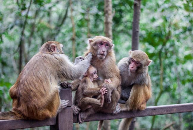 【沿着高速看中国】普洱国家公园:打造一站式森林旅游目的地