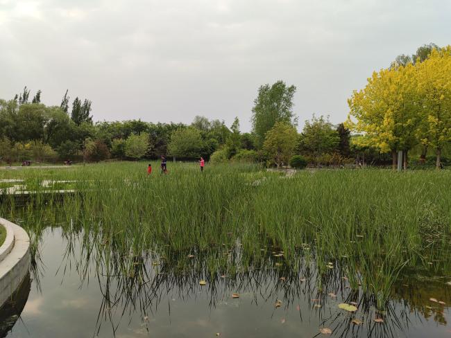 从汽配城到湿地公园,变身后的望和公园水雾系统引市民打卡