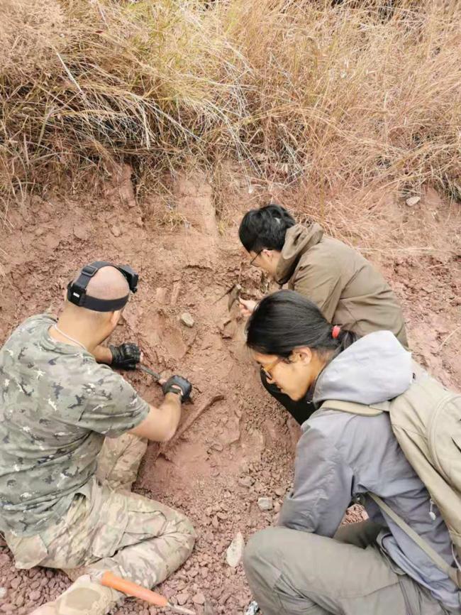 重大发现!云南禄丰出土3岁恐龙幼体化石