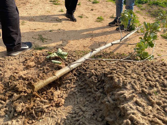 滇池沿岸:整改糊弄十余年 长腰山九成面积遭破坏
