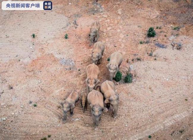 15头亚洲象群继续北迁