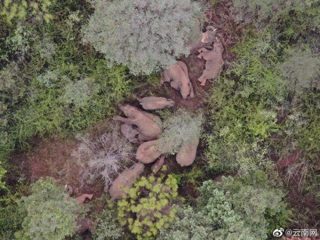 象群向西南迁移超8公里,离群独象距象群约16公里