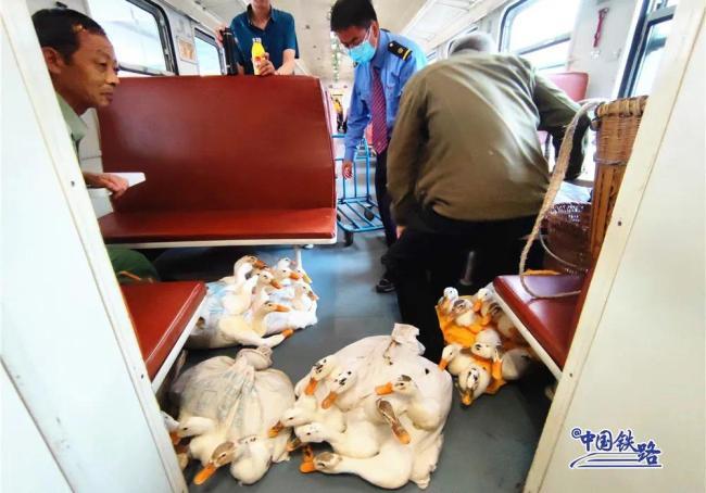 鸡鸭鹅成群上火车!网友:用买票吗?