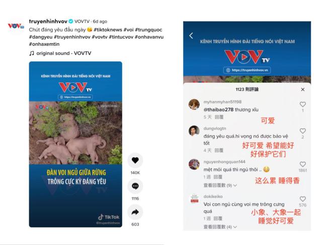 """""""旅行大象""""在中国 百万TikTok网友在线""""追象"""""""