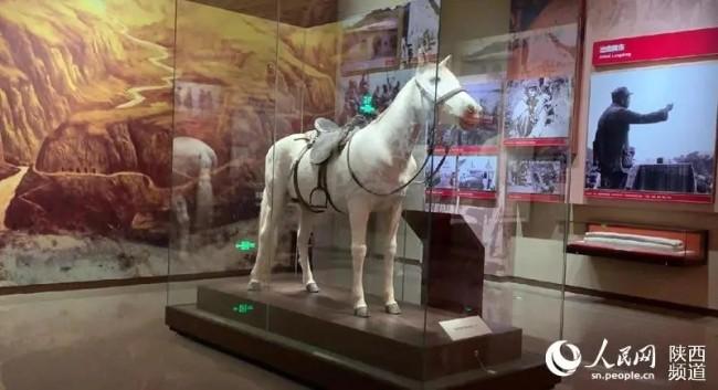 毛泽东主席在转战陕北时骑过的小青马。人民网白鸽摄