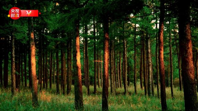 习近平河北行丨生态保护 久久为功——首站走进塞罕坝机械林场