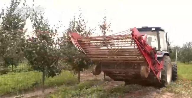 【乡村振兴看一线】河南商丘:制定优惠政策、资金扶持 特色农产促村民增收