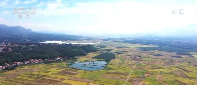 丰收中国 | 云南德宏:遮放贡米迎来丰收季 一田多种助农增收