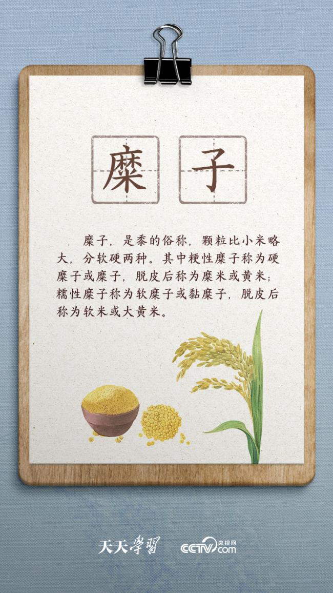 """天天学习丨总书记与陕北老乡聊到的""""糜子""""是啥?"""